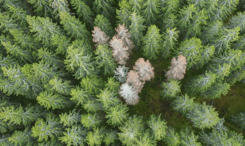 Var med och rädda vår skog – anmälan nu öppen till årets digitala hackaton den 21-22 november